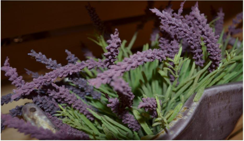 Aura Cacia Lavender calming treatments